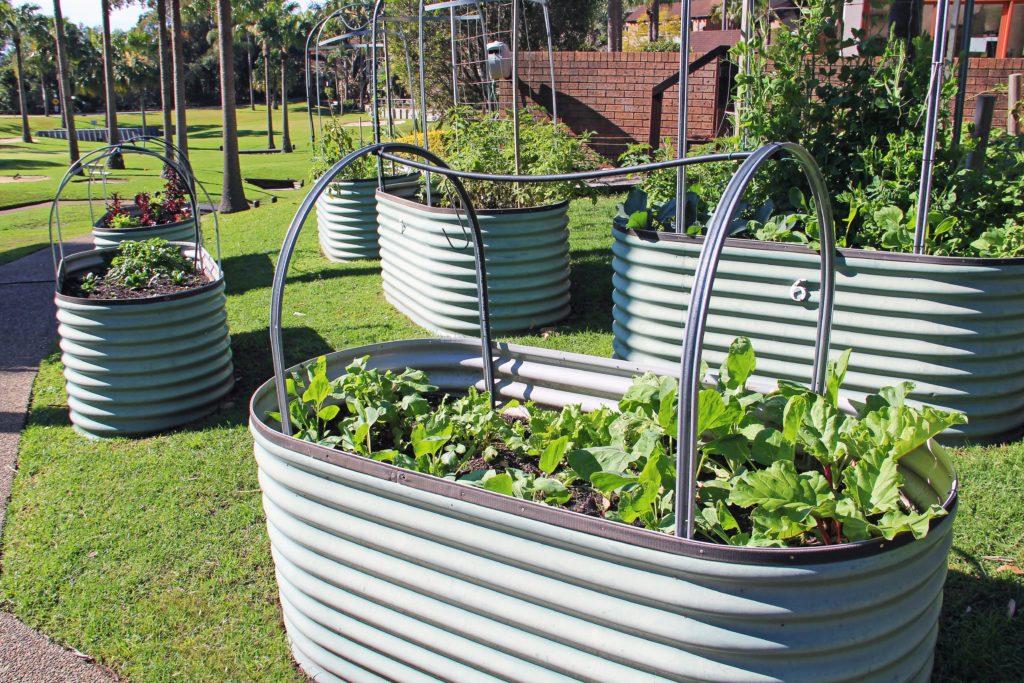 Vegetable Garden in Retirement Village