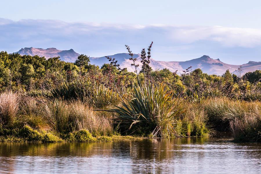 Wetlands and aquatic spaces