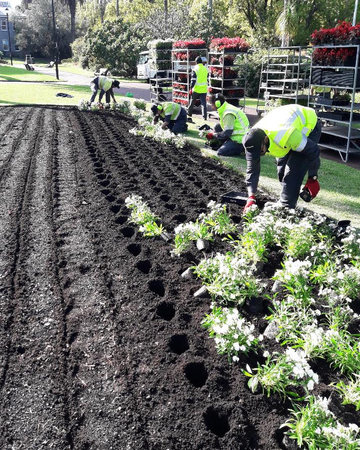Albert Park Planting Fresh Blooms